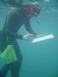 Scientist snorkeler gathering data on the effects of derelict nets on coral reefs. Photo