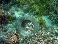 Marine debris on the reef Photo