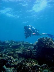 Divers looking and enjoying without disturbing the reef. Photo