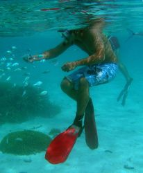 Make sure not to touch the bottom when snorkeling or scuba diving. Photo