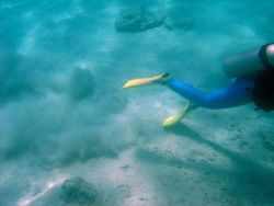 Careless trailing of flippers on bottom can add to sedimentation problems affecting coral reefs. Photo