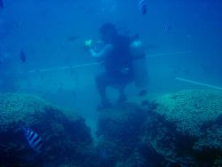 Photographer standing on coral to obtain photograph of tourists could be causing damage to delicate coral polyps Photo