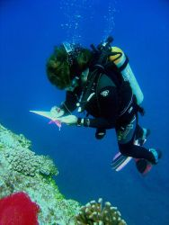Scientist studying area affected by coral reef bleaching. Photo
