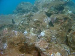 Sediment burying a once-vibrant reef. Photo