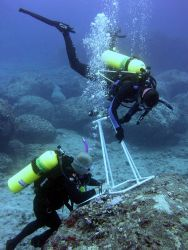 A biologist records algal diversity within a photoquadrat during an underwater survey at Midway Atoll. Photo
