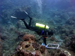 A biologist used a quadrat to quantify invertebrates during an underwater survey Photo