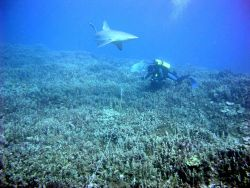 A biologist has company while recording substrate composition along a transect line during an underwater survey. Photo