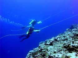 Two divers are towed behind a small boat in order to survey a large area of coral reef. Photo