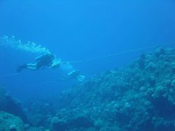 A tow-fish survey -scientists are towed behind a small boat in order to cover a large area of reef in one day. Image