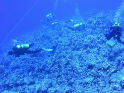 Benthic survey divers studying the coral reef benthic fauna and flora Photo