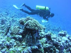 A fish survey transect underway. Image