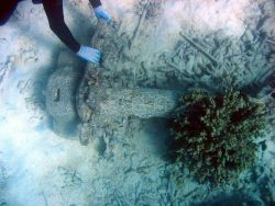Anchor stem from early Twentieth Century wreck on Pearl and Hermes Reef Image