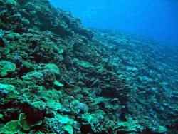 Coral reef scene Photo