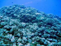Coral reef scene Photo