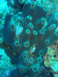 Coral Kingdom Collection Photo