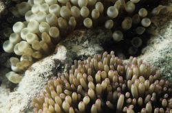 One Tree Reef Photo