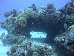A natural bridge formed by coral growth. Image