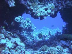 Reef fish mill about a natural arch in the coral reef. Photo