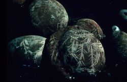 Rocks etched by Desmarestia intertidal Photo