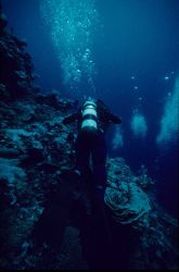 Ann Withell diving 23m depth Image