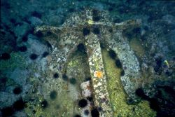 An anchor from the SS CUBA encrusted with sea life. Image