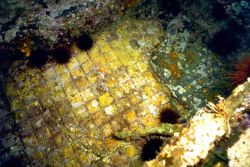 Tile flooring and sea urchins on the SS CUBA. Photo