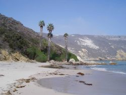 Palm trees on the shore of one of the Channel Islands. Photo