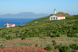 Looking over wildflowers and cactus to historic buildings and the Anacapa Island Lighthouse. Photo