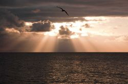 A seagull silhouetted in the clouds and crepuscular rays of a Pacific Ocean sunset. Image
