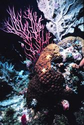 A variety of corals Image