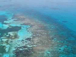 Aerial view of Carysfort Reef off of Key Largo. Image