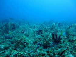 Soft corals, algae, fish ( a doctorfish and butterflyfish), and sponges in a highly diverse reef scene. Photo