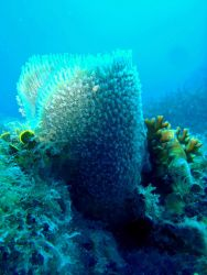 Algae, a large sponge, fire coral, and christmas tree worms. Image