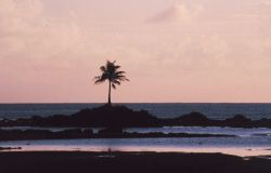 A lone palm tree on an islet offshore from American Samoa Image