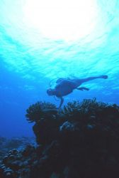A diver enjoying the wonders of the coral reef at Fagatele Bay. Image