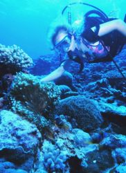 A diver on the reef at Fagatele Bay Image