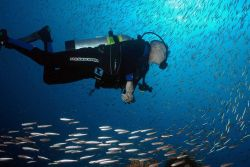 A scuba diver swims amid a school of fish Image