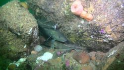 Fishes hiding and corals Photo