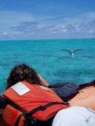 Paulo Maurin of the University of Hawaii photographing an albatross on the water. Photo
