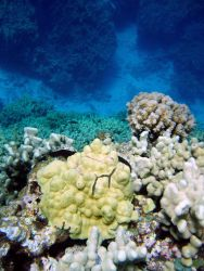 A beautiful coral assemblage overlooking a deep channel. Photo