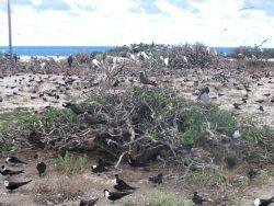 French Frigate Shoals, Tern Island, Hawaiian Islands National Wildlife Refuge. Photo