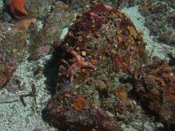 Invertebrate cover on boulder in sandy habitat. Photo