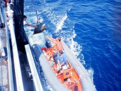 Launch alongside NOAA Ship DAVID STARR JORDAN passing marine turtle aboard for Photo