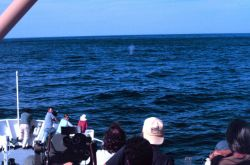 Looking for right whales on the DELAWARE II. Photo