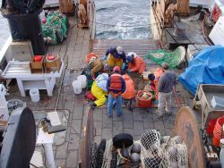 Scientists and curious crew inspect treasures from the deep brought up by a bottom trawl on the NOAA Ship DELAWARE II. Photo