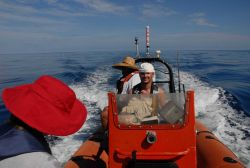 Small boat operations off the DAVID STARR JORDAN in support of marine mammal observations. Photo