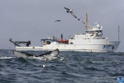 NOAA Ship NANCY FOSTER with humpback whale in foreground. Photo