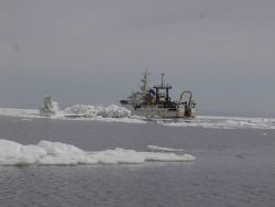 NOAA Ship MILLER FREEMAN seen in Bering Sea ice. Photo