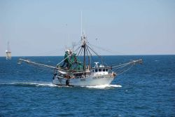 Gulf shrimp boat SUN STAR Photo