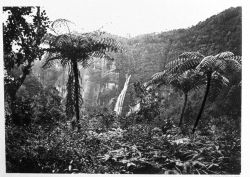 Sumatra Padang Highlands;